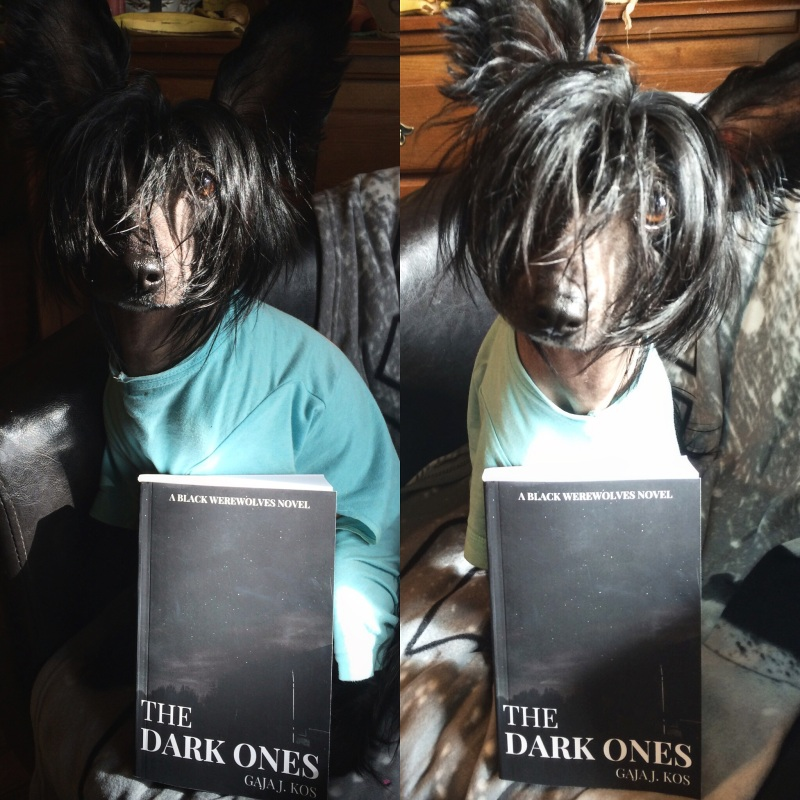 the dark ones chinese crested
